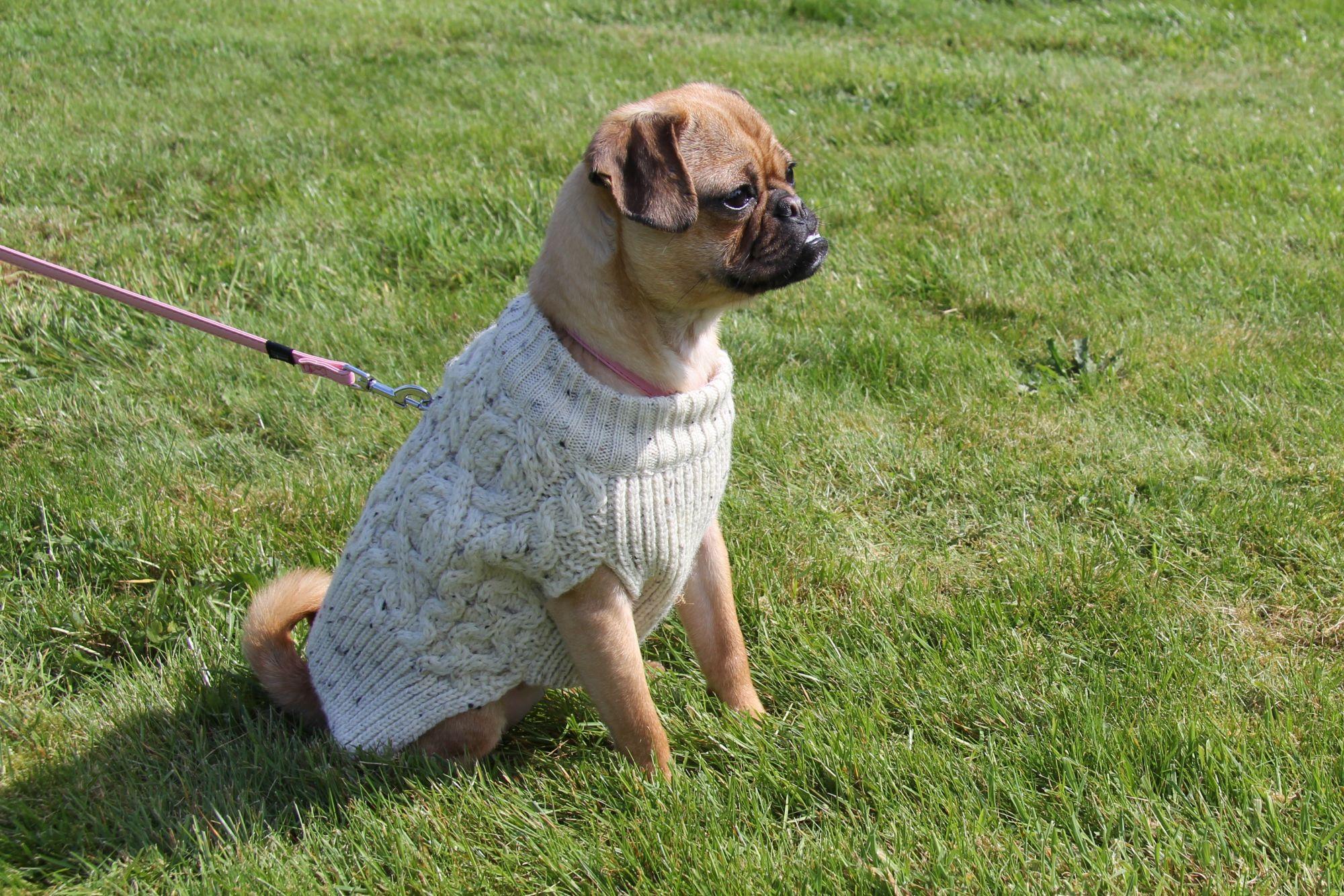 Woollen Dog Sweater